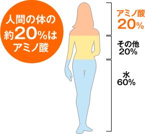 人間の体の約20%はアミノ酸