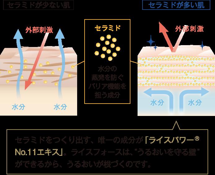 """セラミドをつくり出す、唯一の成分が「ライスパワー®No.11エキス」。 ライスフォースは、""""うるおいを守る壁""""ができるから、うるおいが根づくのです。"""